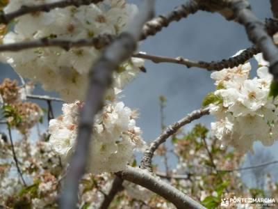 Cerezos flor_Valle del Jerte;nieve sierra de madrid rutas de senderismo cerca de madrid rutas para a